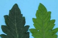 nawozy sadownicze azot