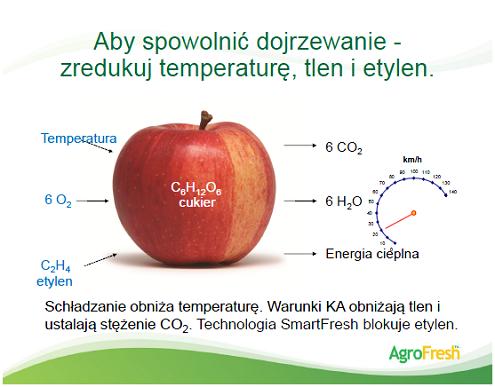 przechowywanie jabłek kontrolowana atmosfera chłodnia