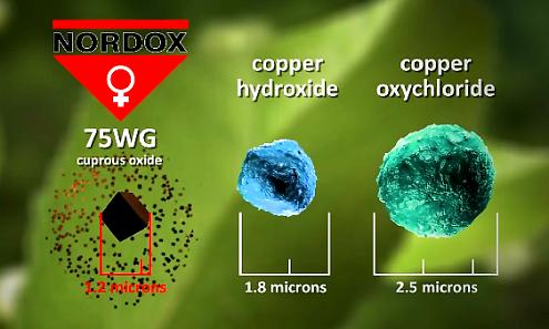 miedzian funguran nordox - wielkość cząsteczek miedzi