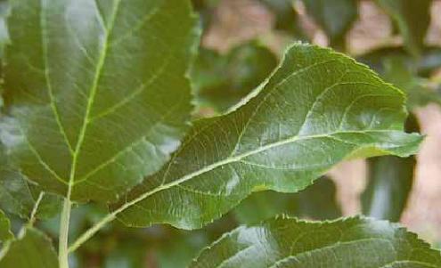 biostymulatory poprawa fotosyntezy biostymulatory