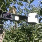 stacja pogodowa imetos komunikaty sadownicze agrosimex 2012