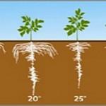 Wpływ temperatury na pobieranie fosforu 2