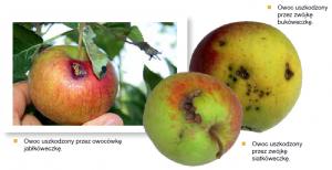 coragen steward cena zwalczanie owocówki zwalczanie zwójek