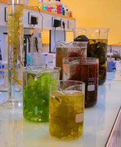 nawozy z alg nawozy z algami