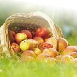 uprawa jabłoni