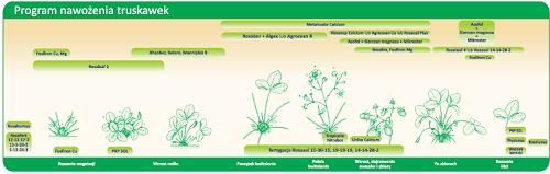 program nawożenia truskawki