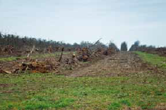 usunięte drzewa