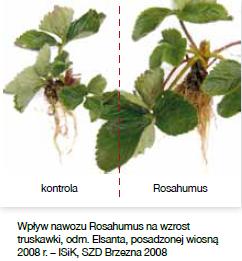 truskawka Rosahumus