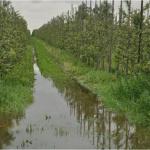 podtopiony sad zalanie sadu