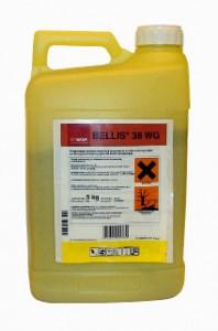 Bellis 38 WG