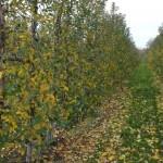 sad jesienią