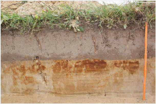przekrój gleby