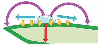 działanie traslaminarne
