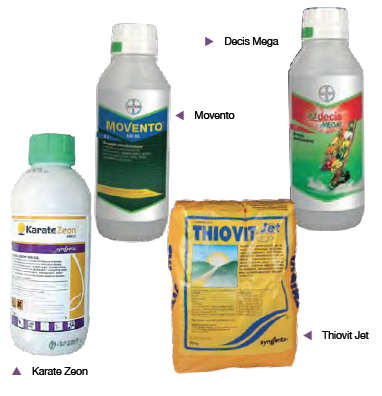 miodówka zwalczanie środki ochrony roślin na miodówkę