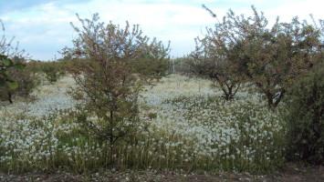 sady po połowie maja 033