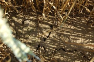 Spękana gleba mała