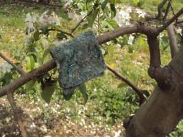 Opaska z dobroczynkiem gruszowym - obecność w sadzie naturalnych wrogów pordzewiaczy sprawia,że nie ma potrzeby stosowania ochrony chemicznej