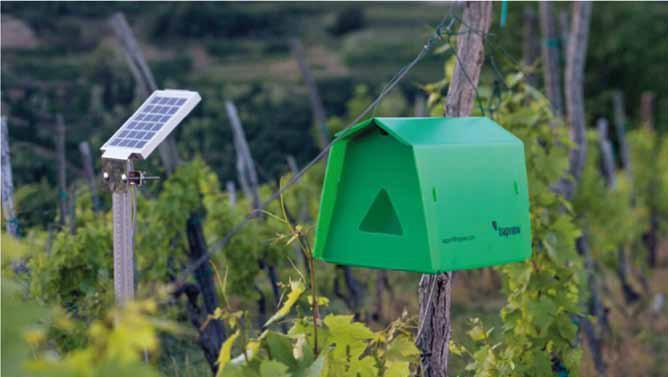 iTrap – pułapka monitorująca wylot szkodliwych motyli.
