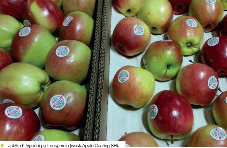 jablka-6tygodni