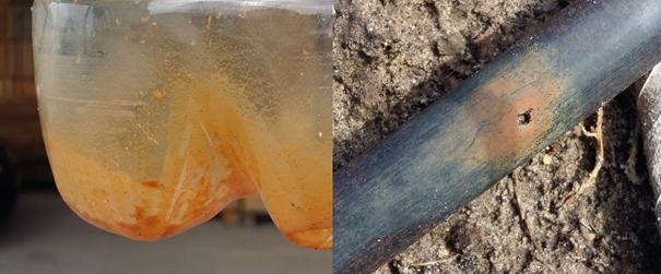 Ślady żelaza w pobranej próbce oraz wytrącone żelazo na kroplowniku  (kroplownik zatkany nie przepuszcza wody ).
