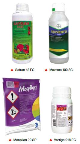 miodówka gruszowa- zwalczanie Safran Movento