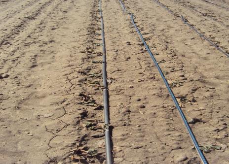 Herbicydy doglebowe aplikujemy na czystą glebę, tuż przed kiełkowaniem chwastów lub na kiełkujące chwasty