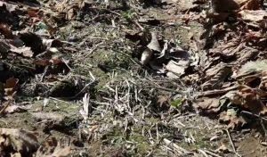 Gleba wolna od chwastów po zimie w truskawce