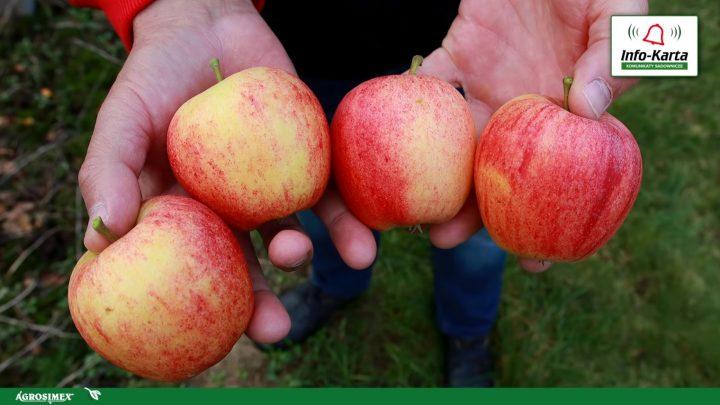 wybarwienie owoców po Harvista